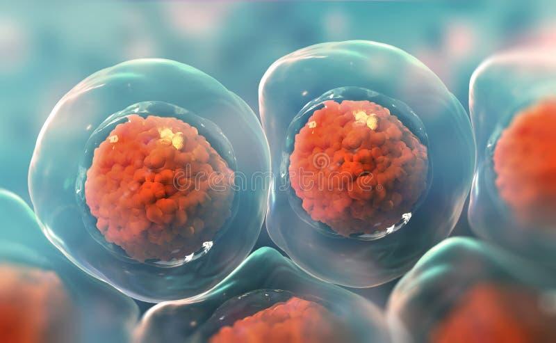 pilhas sob um microscópio Pesquisa das células estaminais Terapia celular Divisão de pilha ilustração royalty free