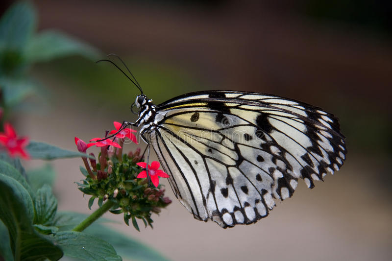 Download Pili Palas Butterfly Farm stock photo. Image of north - 14852112