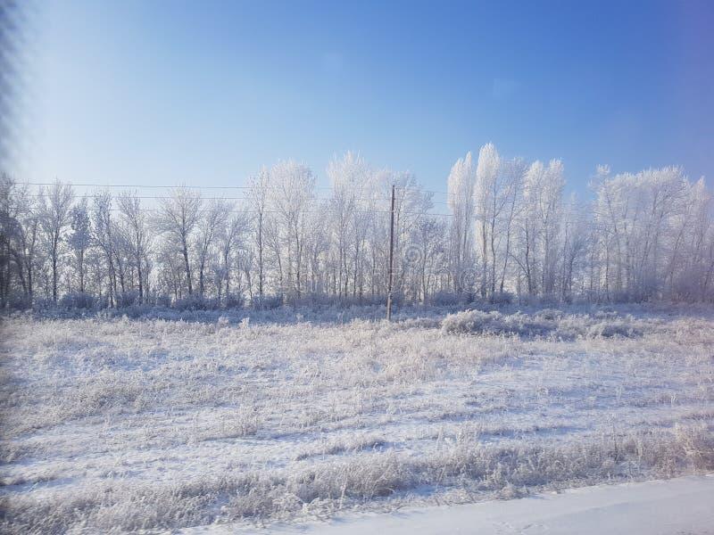Pilier d'arbres de neige d'hiver image libre de droits