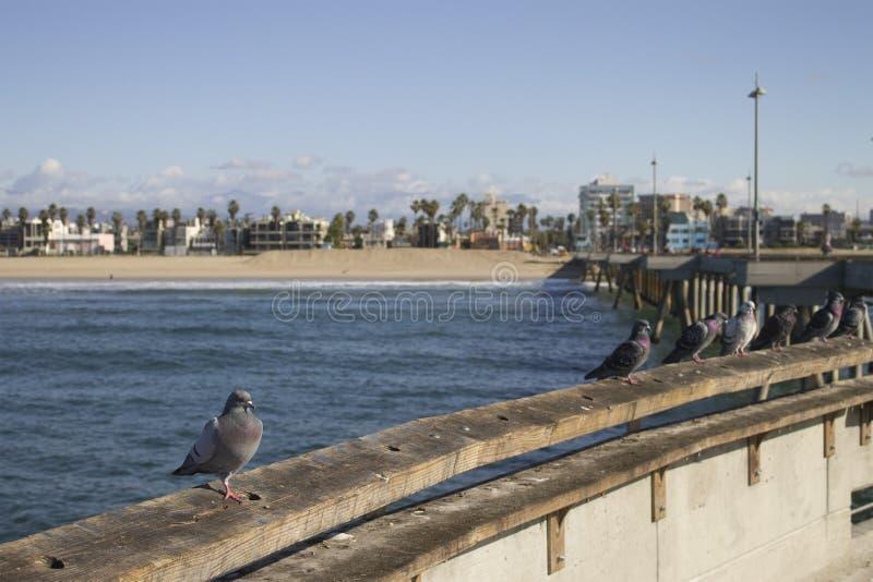 Pilier en plage de Venise, la Californie photo libre de droits