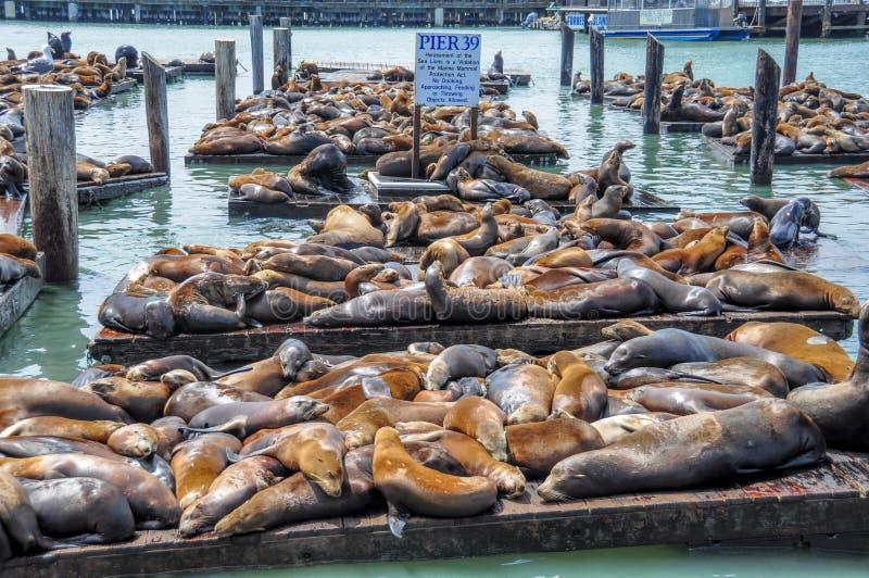Pilier 39 et quai du pêcheur photographie stock libre de droits