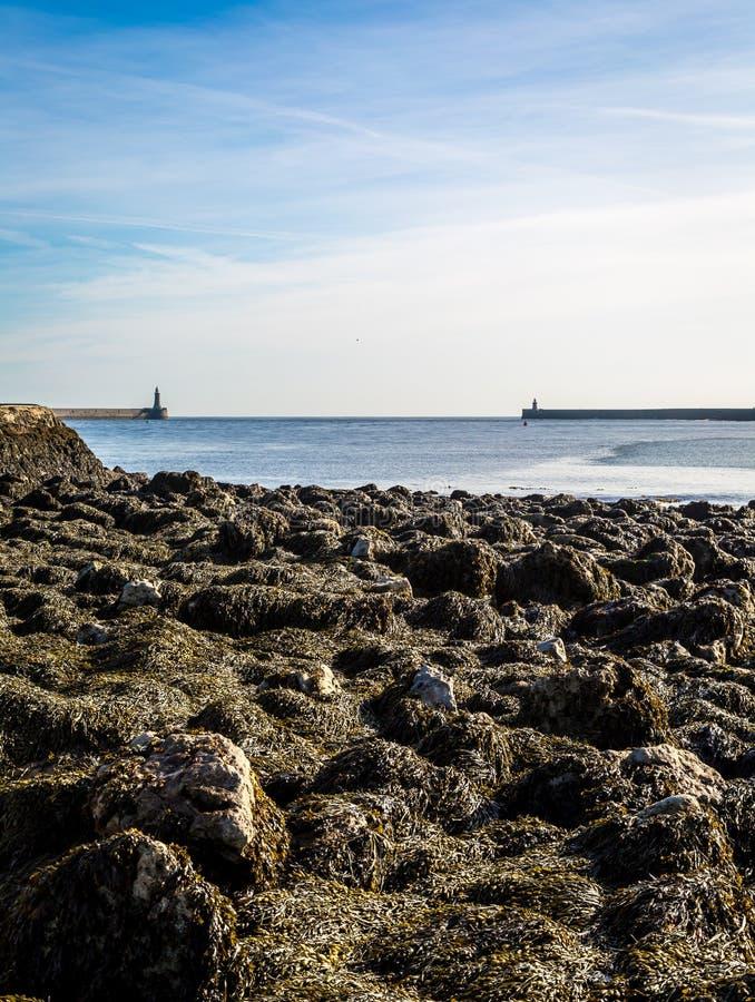 Piliers de Tynemouth - les piliers des boucliers du nord et de sud avec un varech ont couvert le premier plan photos stock