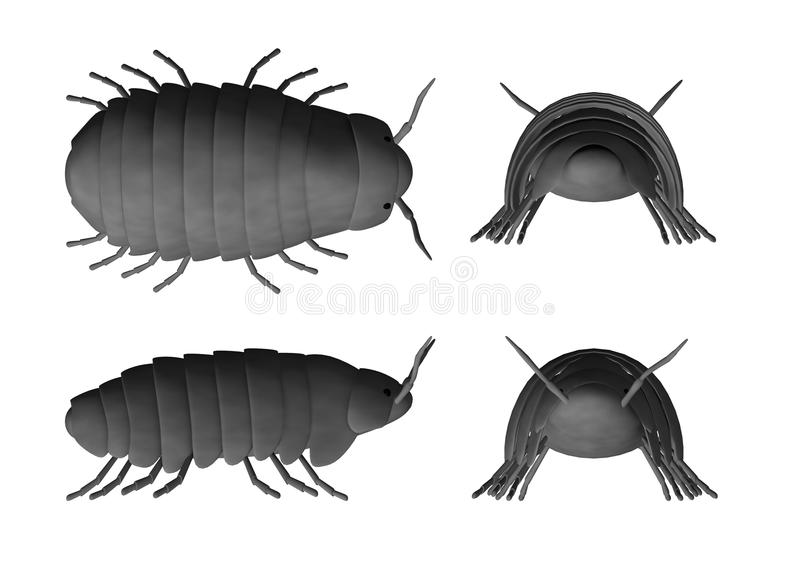 Pill bug. 3d render of pill bug vector illustration