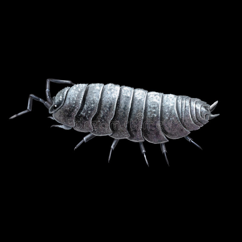 Pill woodlouse, rolly polly or potato bug. Digital illustration of a the (common) pill-bug, (common) pill woodlouse, rolly polly or potato bug royalty free illustration
