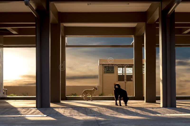 Pillars under the building with dogs. stock photo