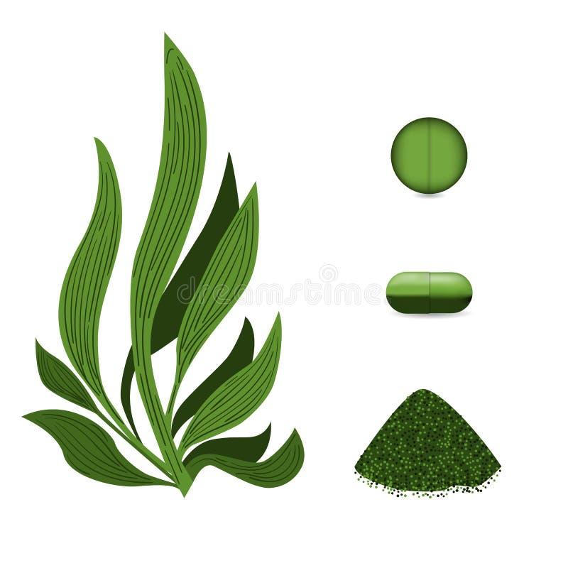 Pillole delle alghe di Spirulina, polvere di spirulina Alimento vegetariano Vettore della pianta royalty illustrazione gratis