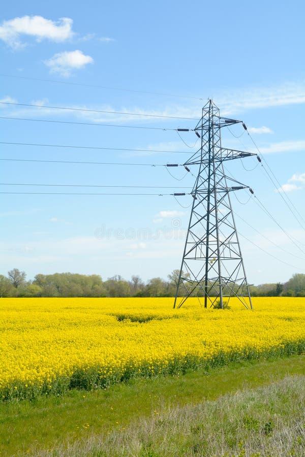 Pilone di elettricità nel giacimento del seme di ravizzone immagine stock