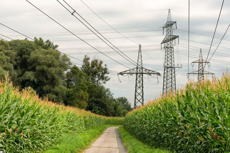 Pilones del campo y de la electricidad de maíz con los cables foto de archivo