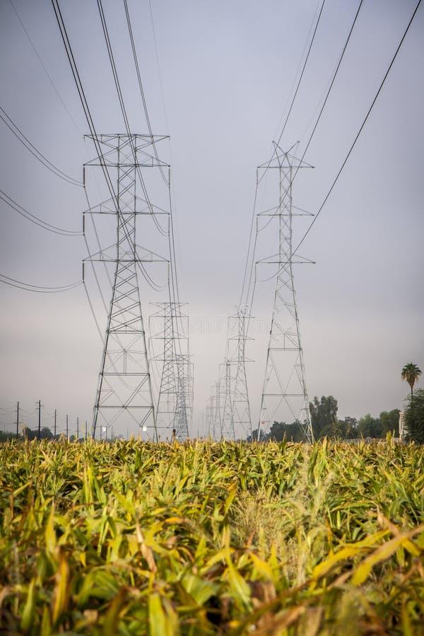 Pilones y rejilla de la electricidad sobre un campo de maíz imagen de archivo libre de regalías