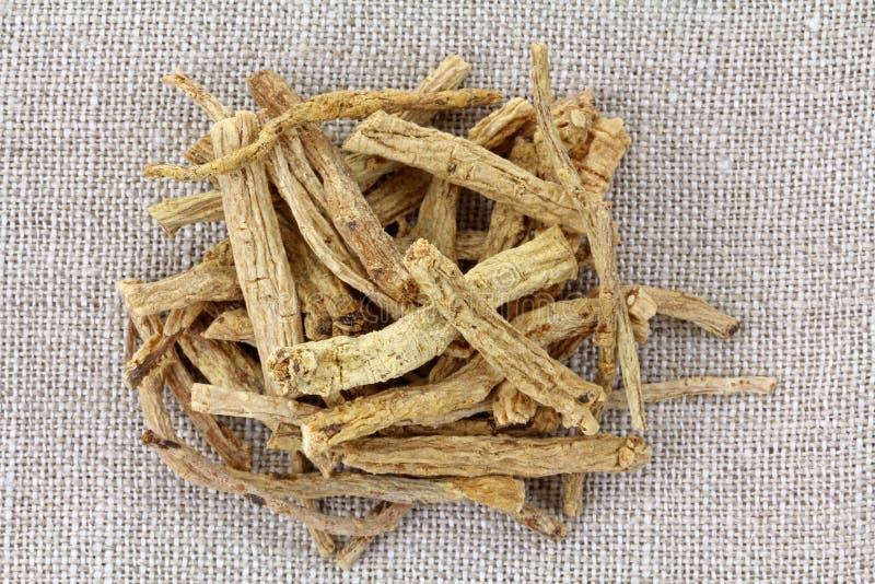 Pilosula de Codonopsis, raíz foto de archivo
