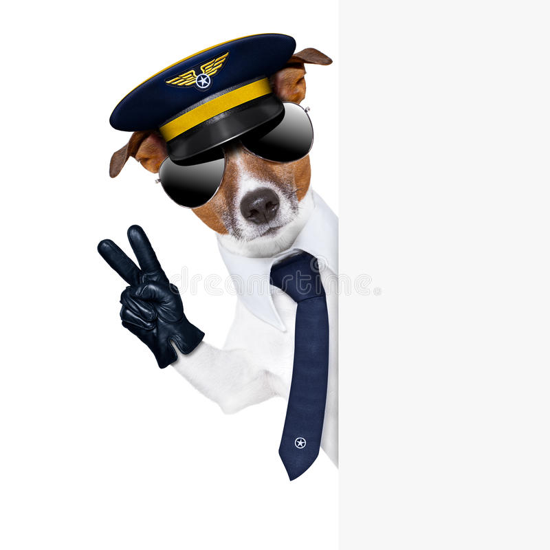 Pilot dog royalty free stock images