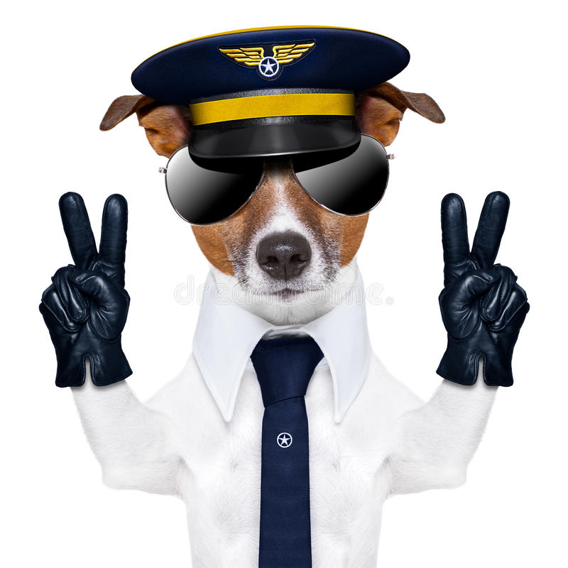 Pilot dog. Pilot captain dog with peace fingers and a blue tie royalty free stock image