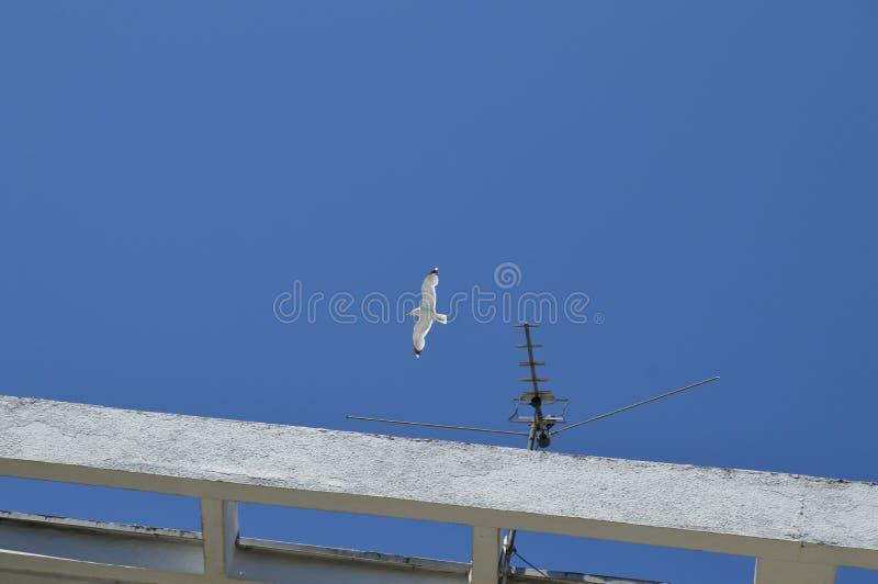 Pilotando un gabbiano solo sopra il tetto contro il cielo blu fotografia stock
