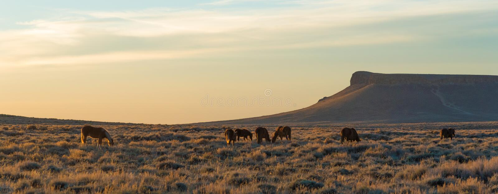 Pilote Butte, Wyoming photos stock