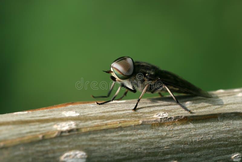 Pilote des insectes photo libre de droits
