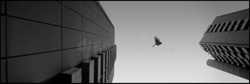 Piloti il mio uccello fotografie stock libere da diritti