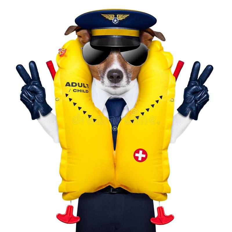 Pilotowy pies obrazy stock