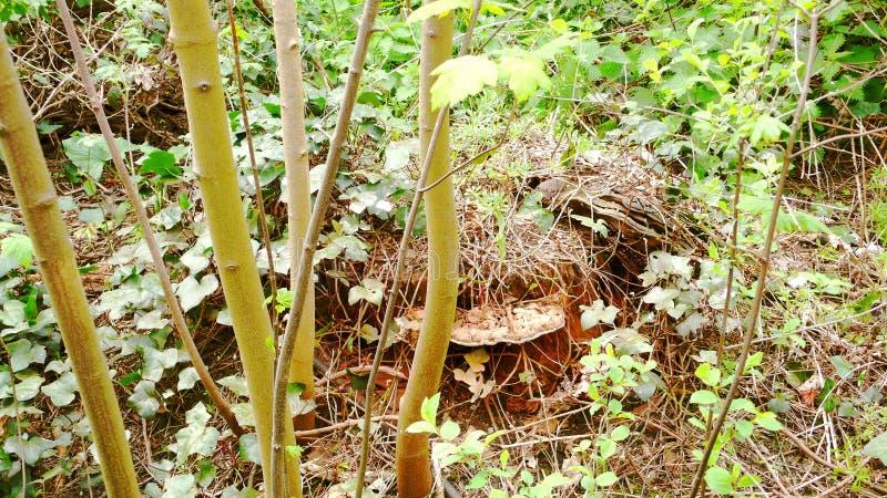 Pilz auf Baumstumpfversion 2 lizenzfreies stockbild