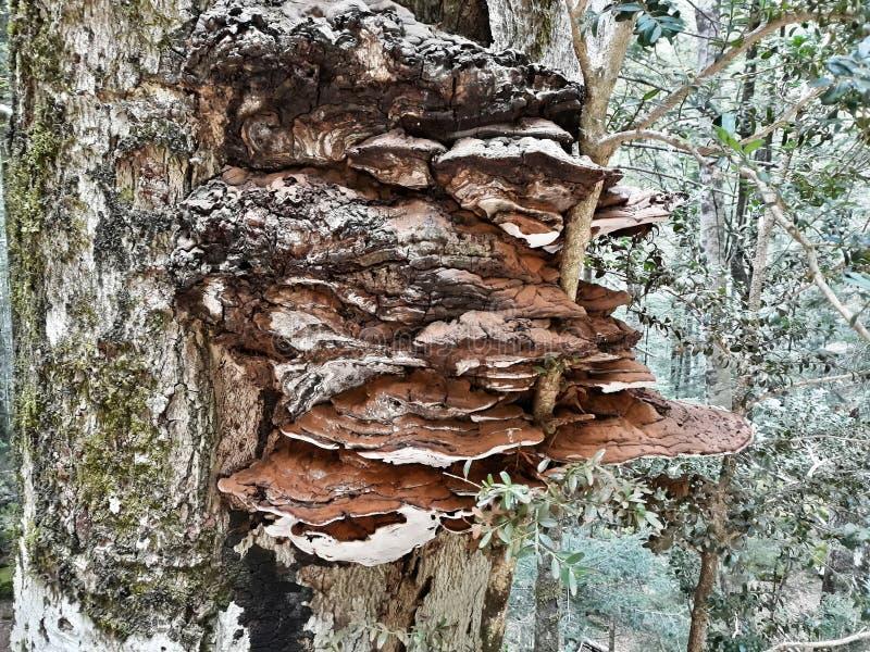 Pilz auf Buchenbaumstamm in Ordesa, Huesca spanien lizenzfreie stockfotografie