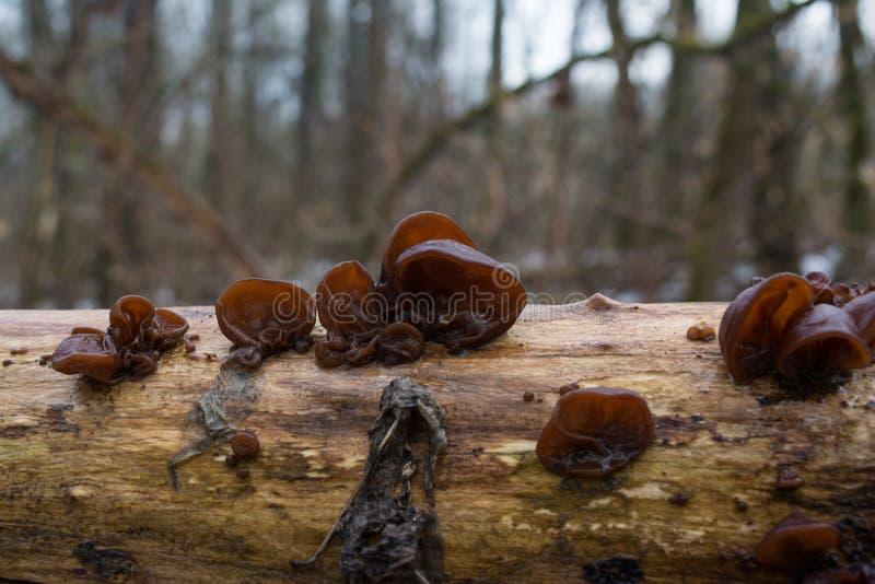 Pilz auf dem Baumast stockfotos