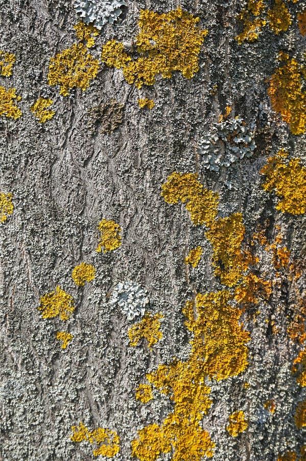 Pilz auf einem Baumkabel lizenzfreie stockfotos