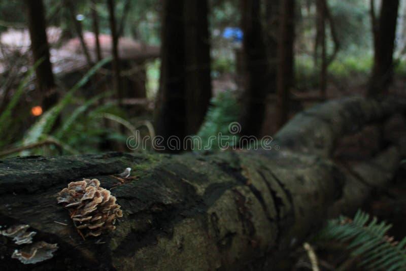 Pilz auf einem gefallenen Baum lizenzfreies stockfoto