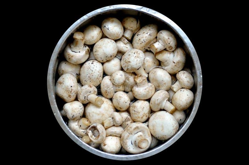 Pilz auf Markt lizenzfreie stockbilder