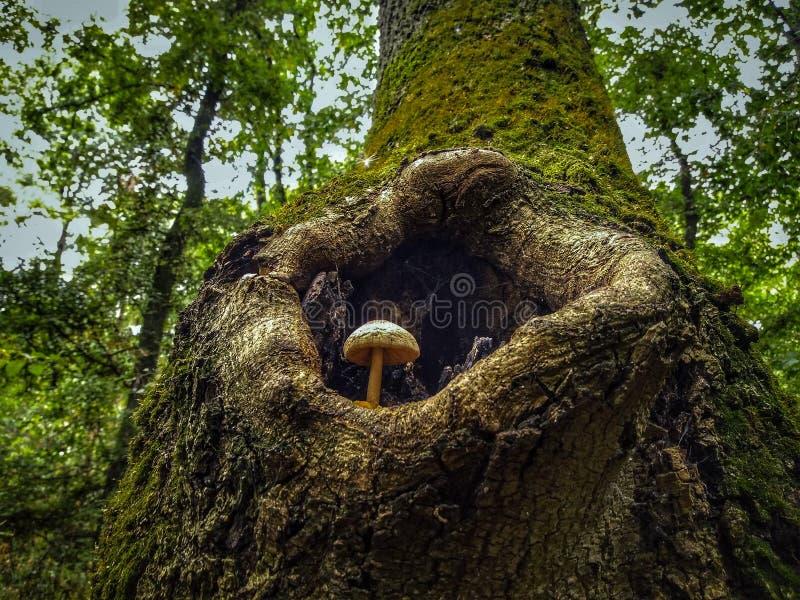 Pilz in den drei stockbild