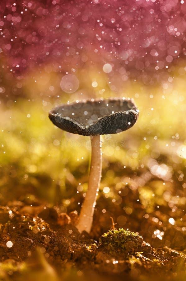 Pilz des Herbstes lizenzfreie stockfotografie