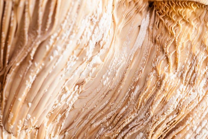 Pilz Hymenophore lizenzfreie stockfotografie