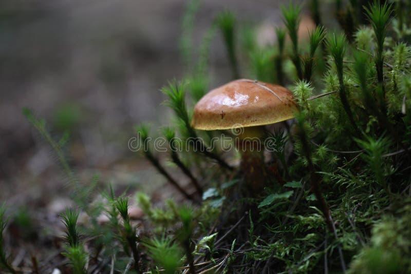 Pilz im Wald stockfotos