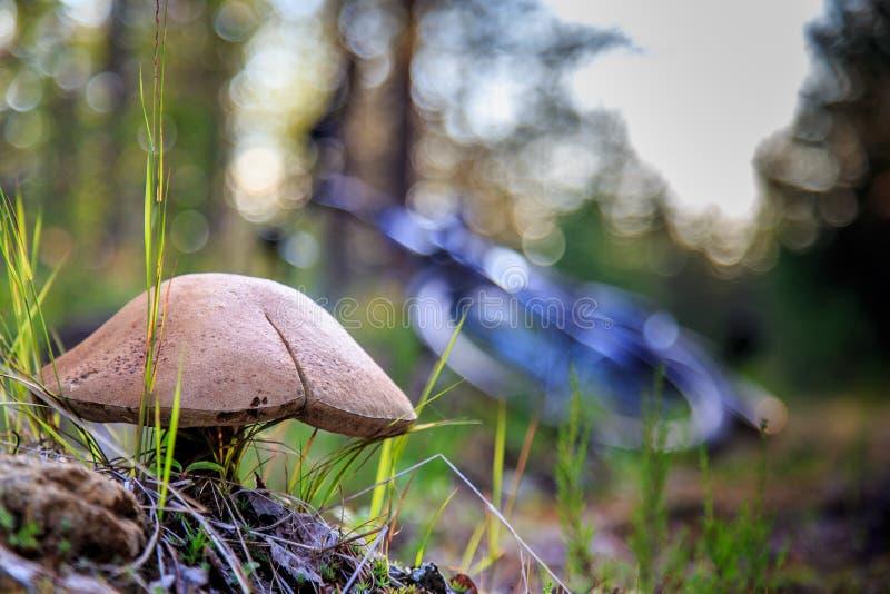 Pilz im Wald lizenzfreie stockfotos