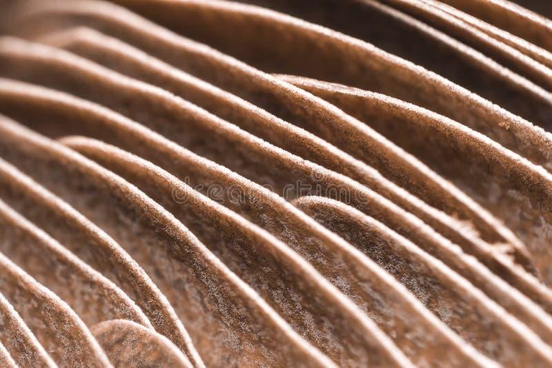 Pilz-Kiemen lizenzfreie stockbilder
