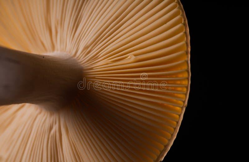 Pilz-Kiemen - schließen Sie oben lizenzfreie stockbilder