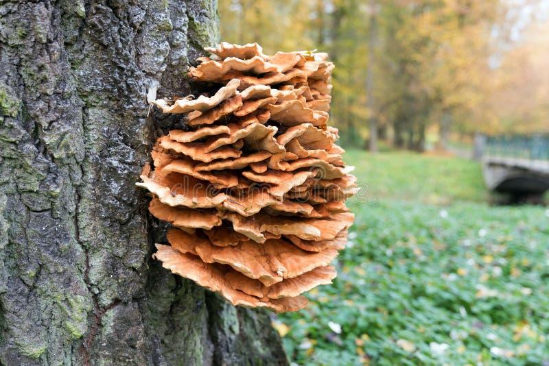 Gelber Pilz Am Baum