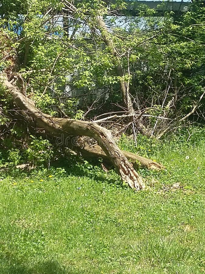 Pilz, Wald, Grün lizenzfreies stockbild