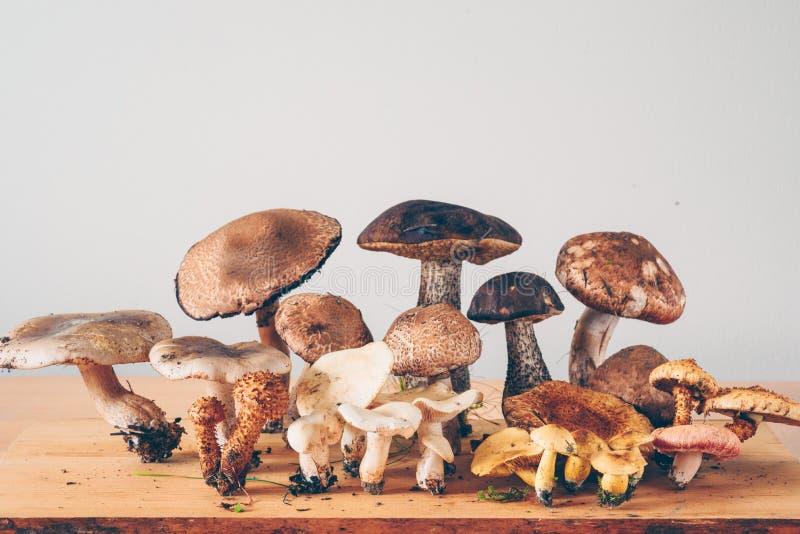 Pilzarten lizenzfreie stockfotos
