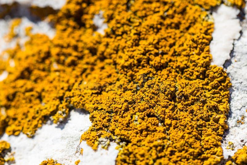 Pilzartige Form der schönen orange Flechte auf weißem Stein durch Seeufer lizenzfreie stockfotos