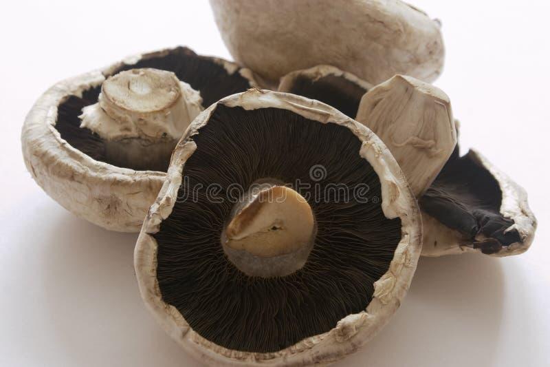 Pilze lizenzfreies stockfoto
