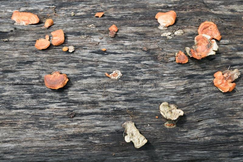 Pilze auf dem Bauholz stockfotos