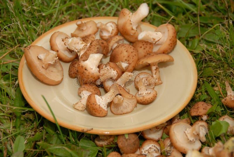 Pilze auf der Platte lizenzfreie stockfotos