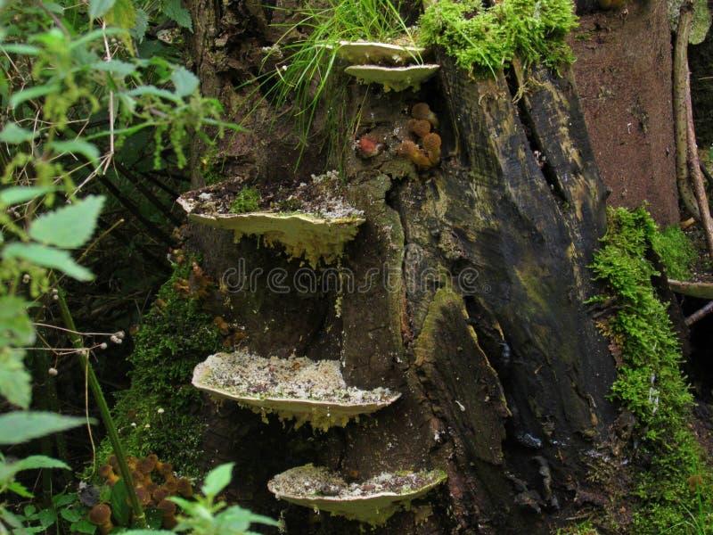 Pilze auf einem Protokoll lizenzfreies stockfoto