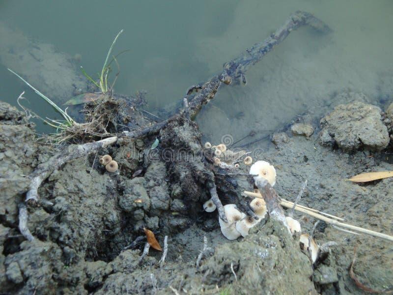Pilze in der Bank von einem Fluss stockfoto
