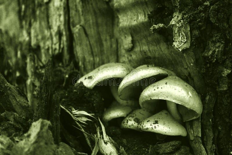 Pilze in der Dunkelheit stockbild