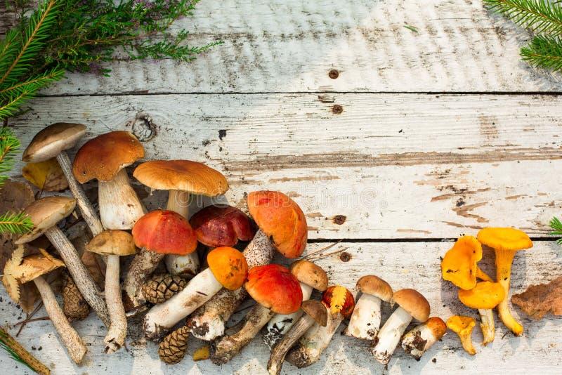 Pilze in der Waldkarte auf Herbst oder Sommerzeit Waldernte Boletus, Espe, Pfifferlinge, Blätter, Knospen, Beeren, Draufsicht stockfotografie