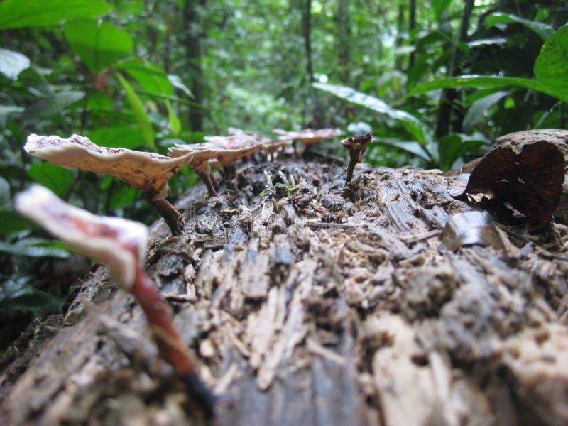 Pilze, die auf einem faulen Baum wachsen stockbilder