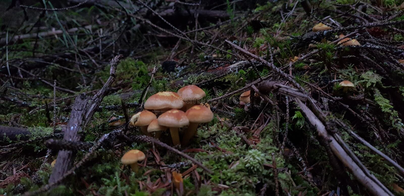 Pilze in einem Wald stockbilder