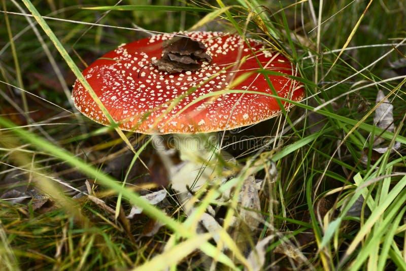 Pilze, Giftpilze, Gift lizenzfreie stockfotografie
