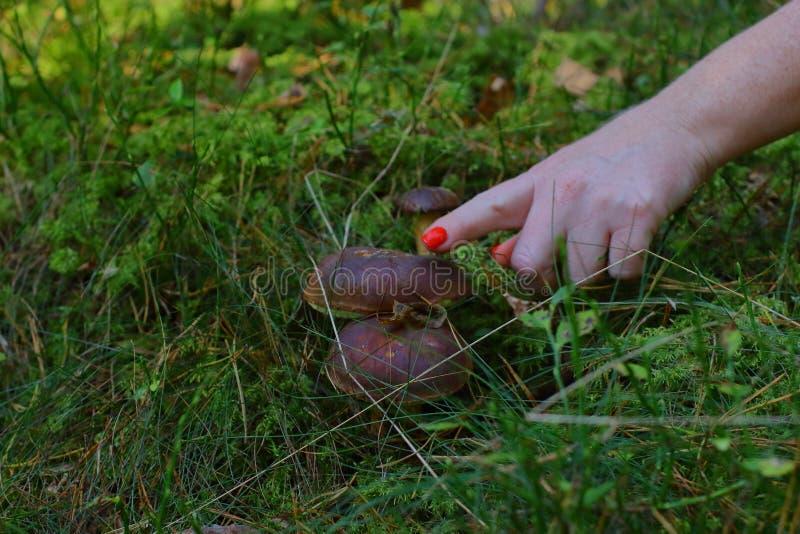 Pilze am Gras stockbild