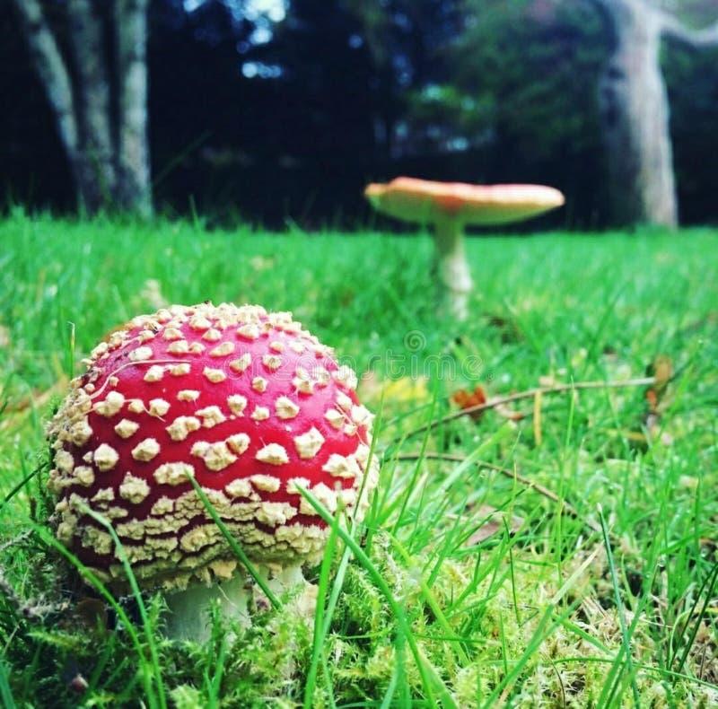 Pilze im Garten stockfotografie